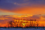 Canada  Manitoba  Altona Trees at sunrise on the snowy prairie