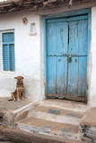 Dog resting outside a house  Jojawar  Rajasthan  India
