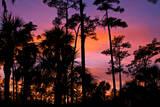 USA  Florida  Big Cypress National Preserve Adams camp sunset