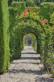 Archway of trees in the gardens of the Alhambra  Granada  Spain
