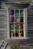 Geraniums in window at Olson House  Cushing  Maine  USA