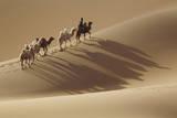 Camel caravan  Badain Jaran Desert  Inner Mongolia  China