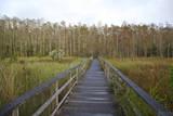 Corkscrew Swamp Sanctuary  Florida  USA