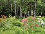 Garden and Forest in New Brunswick  Canada