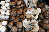 USA  California  Los Angeles  Mushroom at the Hollywood Farmers Market