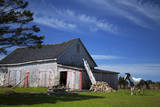 Weathered barn and horse  Guysborough County  Nova Scotia  Canada