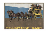 Yellowstone Horse-Drawn Charabanc