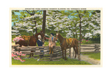 Dogwood Blossoms  Horses