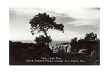 Lone Pine  Torrey Pines State Park