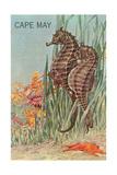 Seahorses  Cape May