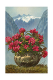 Rhododendrons in Pot by Mountains