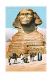 Sphinx  Camels Bedouin
