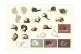 Snails and More Snails