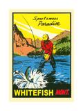 Sportsman Paradise  Whitefish