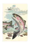 Rainbow Trout Eying Dragonfly