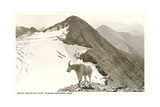 Rocky Mountain Goat  Glacier