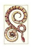 Red Patterned Snake