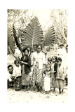 Natives with Giant Leaves