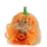 Halloween Cat Dressed Up Like a Pumpkin