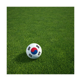 South Korean Soccerball Lying on Grass