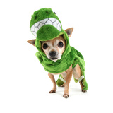 A Cute Chihuahua Dressed Up as a Dinosaur