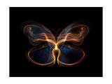 Butterfly Element