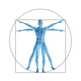 Vitruvian Human or Man  Anatomy Body for Biology