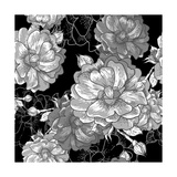 Beautiful Monochrome Rose Background