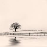 Winter Oak Tree in Snow