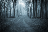 Road Trough a Dark Blue Forest with Fog