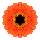 Orange Mandala Gerbera Flower Kaleidoscope