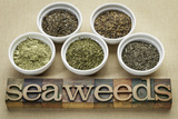 Bowls of Seaweed Diet Supplements (Bladderwrack  Sea Lettuce  Kelp Powder  Wakame and Irish Moss)