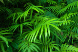 Ferns Leaves Green Foliage Tropical Background