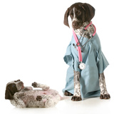 Veterinary Care - German Shorthaired Pointer Dressed as a Veterinarian Looking after Sick Puppy