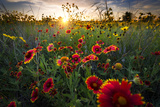 Breezy Dawn over Texas Wildflowers