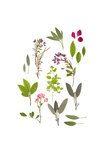 Herbs and Flowers of Summer