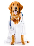 Dog Dressed as a Doctor or Vet