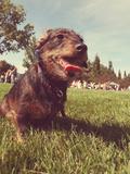 A Cute Dog at a Local Public Park