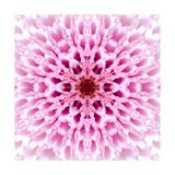 Pink Concentric Flower Center: Mandala Kaleidoscopic Design