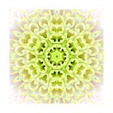 White Concentric Flower Center: Mandala Kaleidoscopic Design