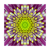 Purple Concentric Flower Center: Mandala Kaleidoscopic