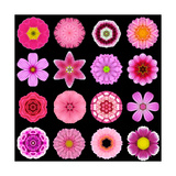 Big Collection of Various Purple Pattern Flowers