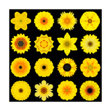 Big Collection of Various Yellow Pattern Flowers