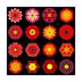 Big Collection of Various Red Pattern Flowers