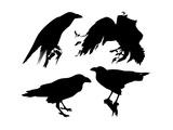 Raven Set