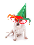Pet with Party Hat and Court Jester Glasses