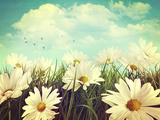Vintage Look of Summer Daisies in Grass