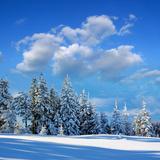 Winter Landscape with Snow in Mountains Carpathians  Ukraine