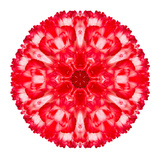 Red Carnation Mandala Flower Kaleidoscopic