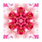 Pink Concentric Flower Center: Mandala Kaleidoscopic